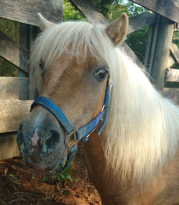Pet our miniature horses!