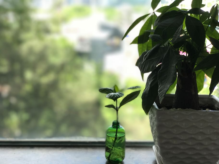 The window sill at your room. The plants will nicely live with you.