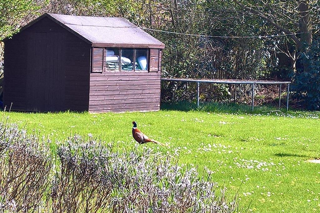 Garden visitors Frankie