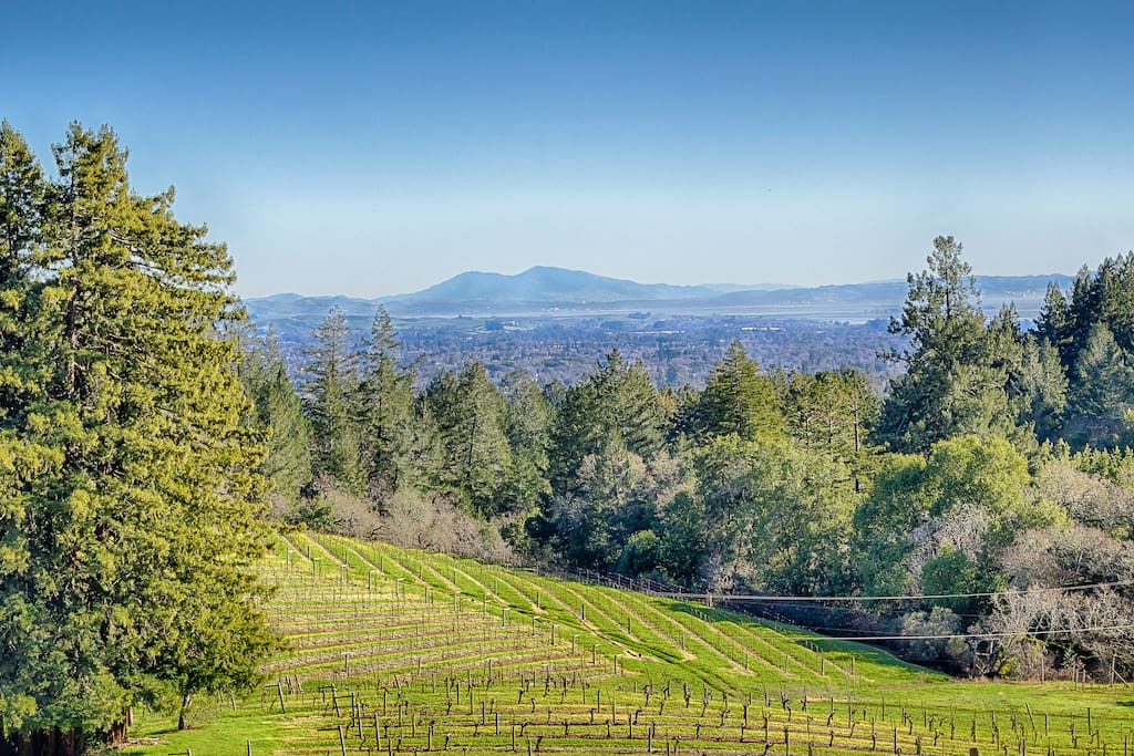Stunning views of Sonoma are at your fingertips - walk just a short way down the road