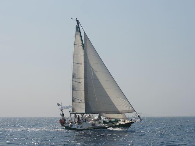 Customized cruise on 36 ft Sailing Yacht