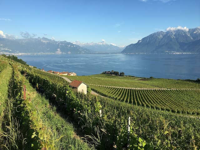 A hideaway in the jewel of the UNESCO protected Lavaux wine producing region.
