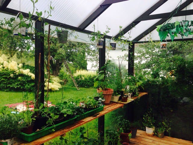 green house - pick a tomato or  herbs during summertime.