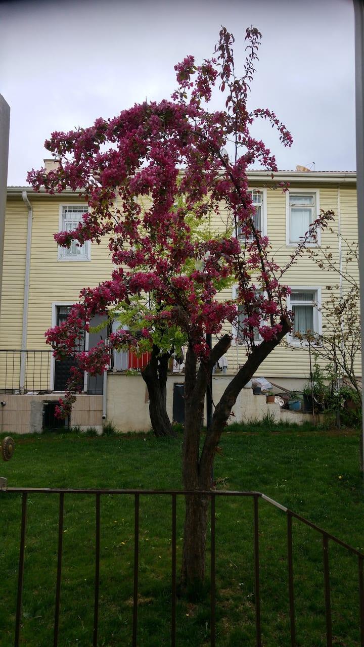 Batıkent'te Müstakil, Bahçeli Ev (Garden House)