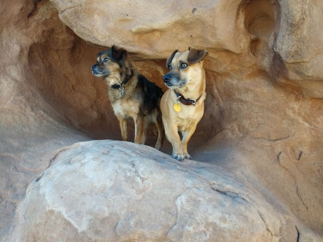 Leila & Bella. Wonderful Companions and Friends.
