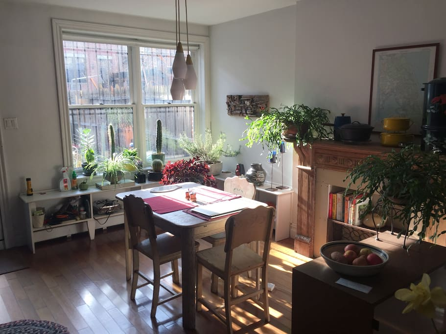 The kitchen table/dining room gets great light and there are lots of green things to keep you company
