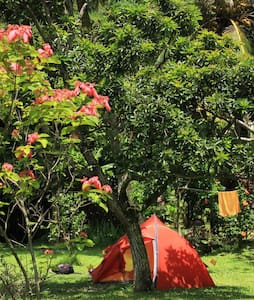 "Big Banana Campground ""Woods 1"" - Soufriere  - Tent"
