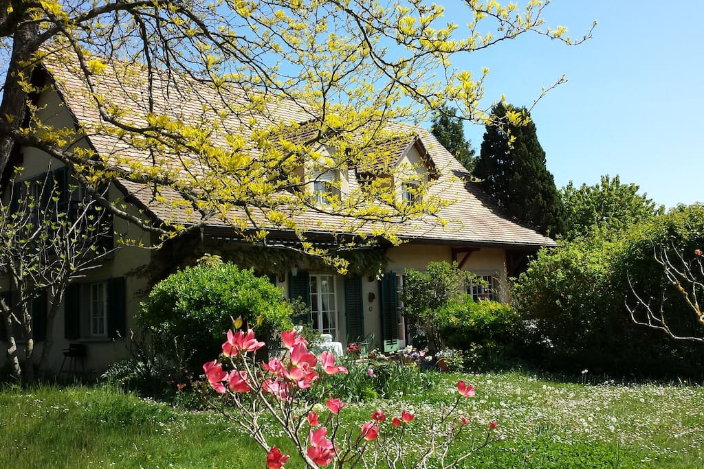 This is a view of the house from the garden in all of it's glory.