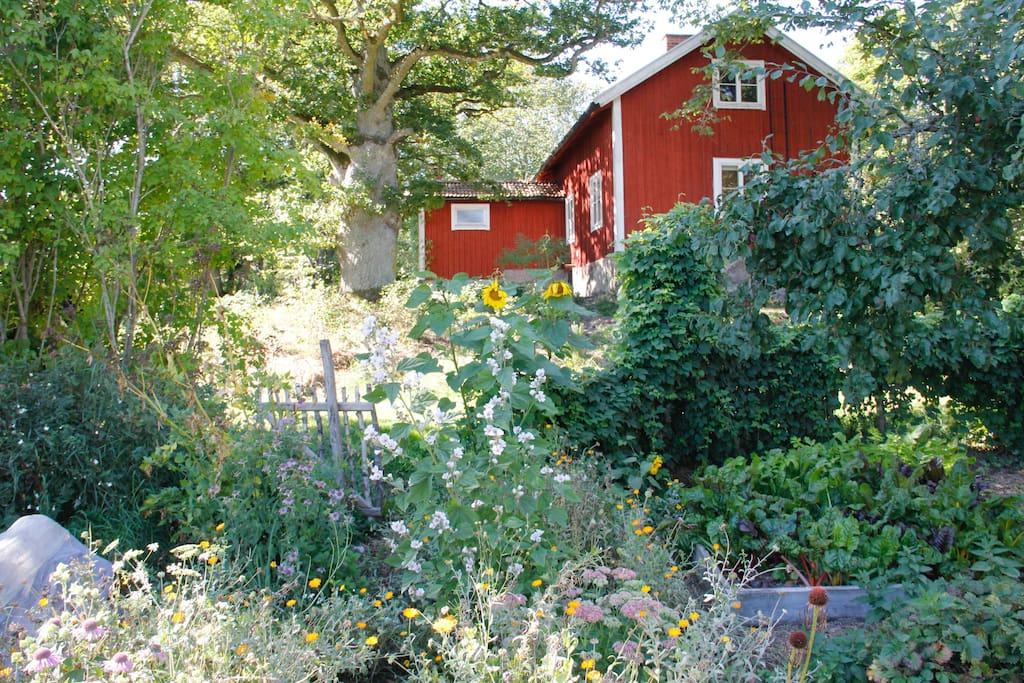 The house from the vegetable garden.