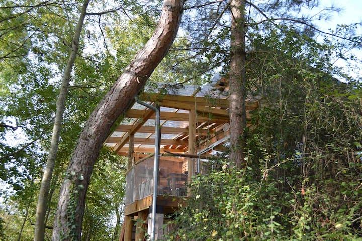 Cabane aux Arbres Tordus Vue Pyrénées, Insolite