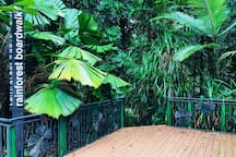 Rainforest boardwalk from resort to Botanical gardens and popular walking tracks
