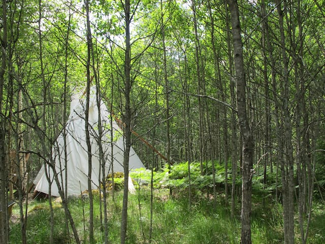 Cozy tipi in a small forest - Raasepori