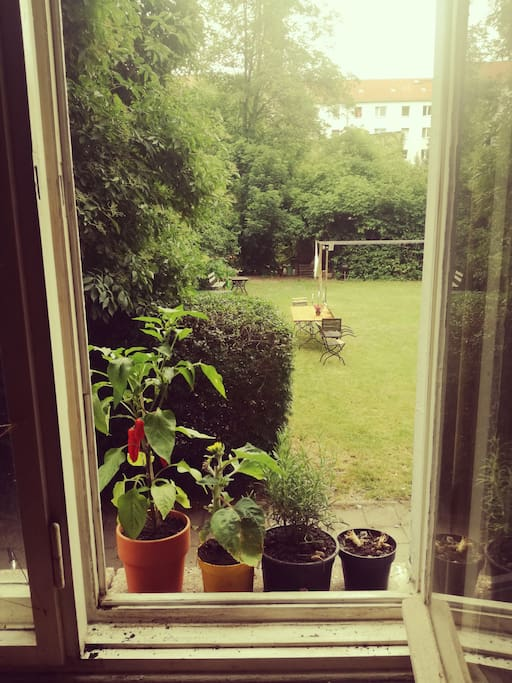 View of the garden from living room