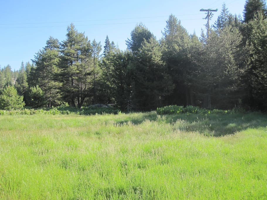 Here is a shot of the meadow area- soon the grass will get cut to make it a great area to camp or play