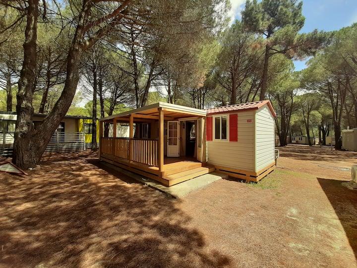 Lux camp 1