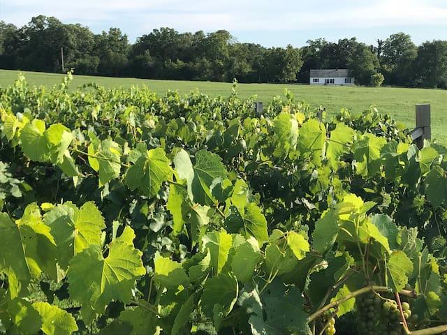 Edg-Clif Winery's Vineyard Cottage