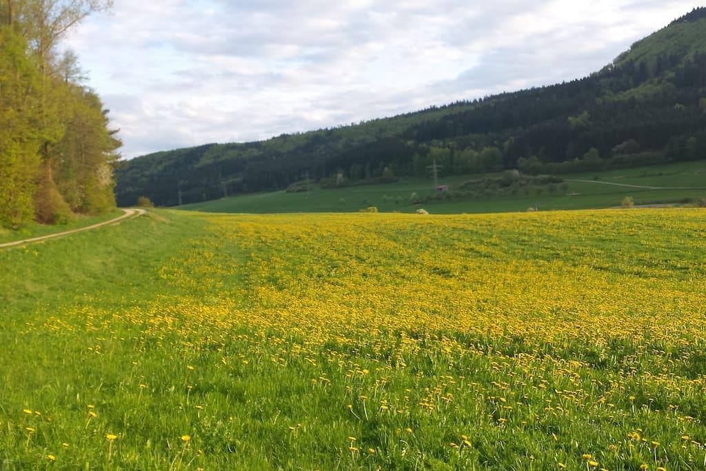 Unsere Grüne und stille Umgebung lädt zum Entspannen und Wandern ein. Geniesen Sie die Ruhe!