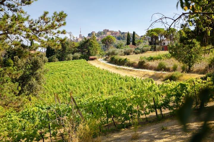 RomagnaBNB The Vineyard Cottage