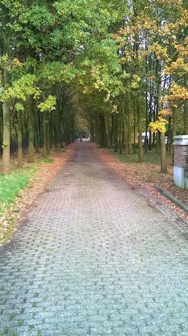 Toegangsweg