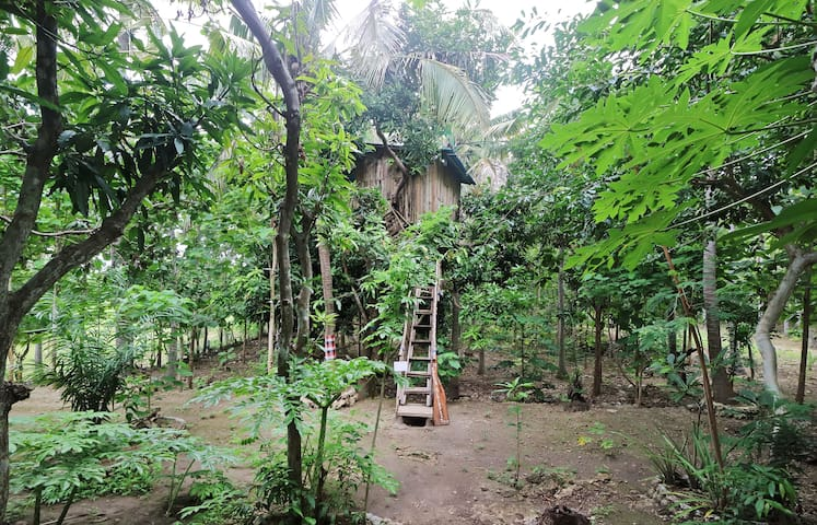 Nyuh Bengkok Tree House - Nusapenida - บ้านต้นไม้
