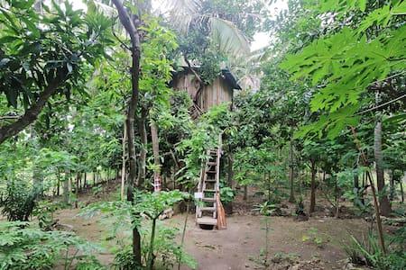 Nyuh Bengkok Tree House - Nusapenida - Dům na stromě
