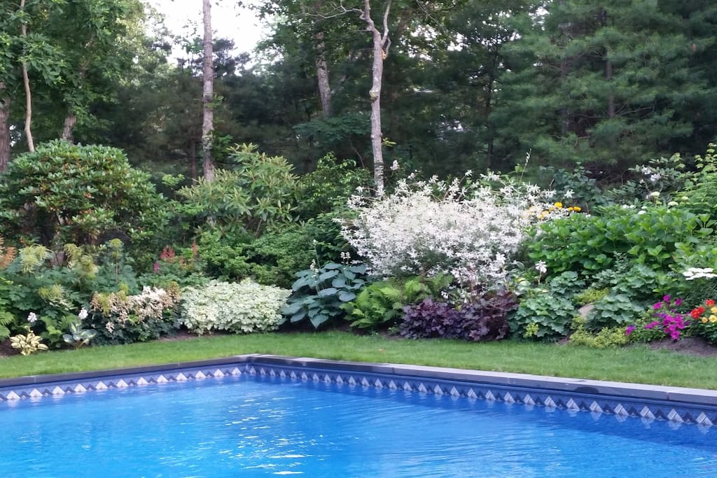 The pool from the deck