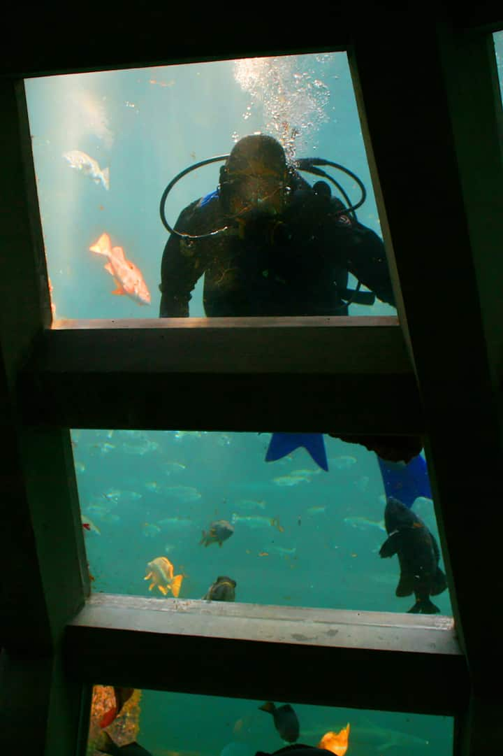 See the aquarium wake up