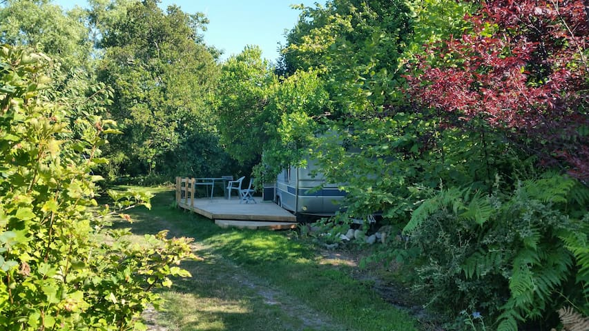 A Caravan in a permaculture forest garden by ocean