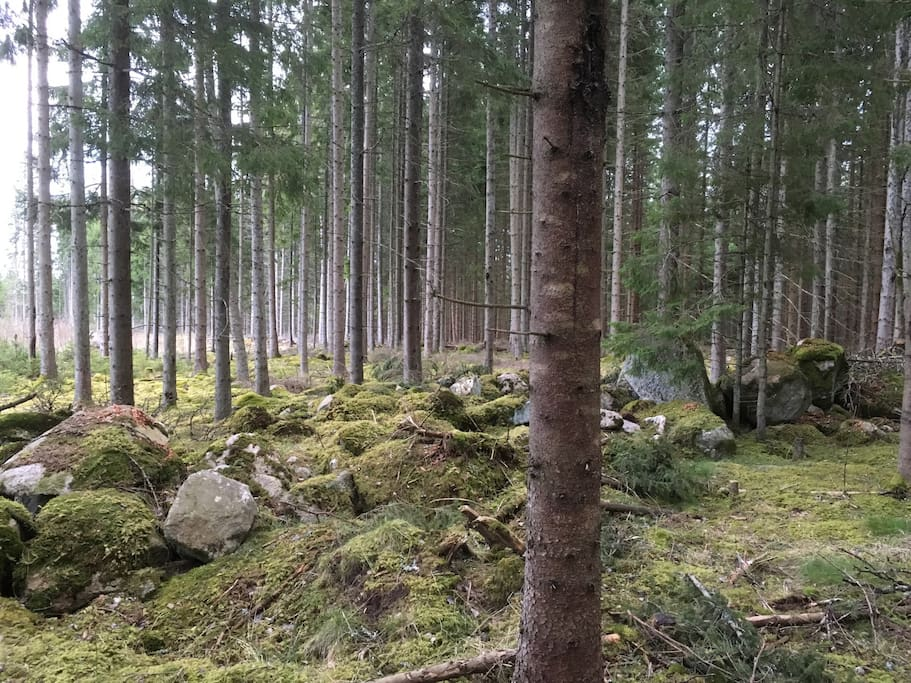Forrest nearby the house, enjoy walking close to the wildlife.