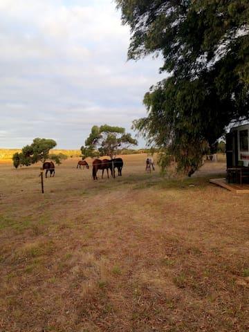 Caravan Farmstay - Deepdene - Bobil