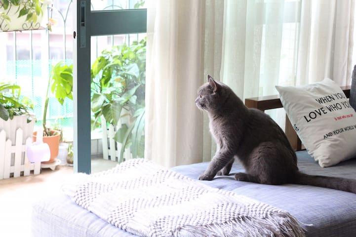 离机场近而静的独卫单间【小墅家】~让你在异地流浪的日子里,有投影和肥猫陪你度过~
