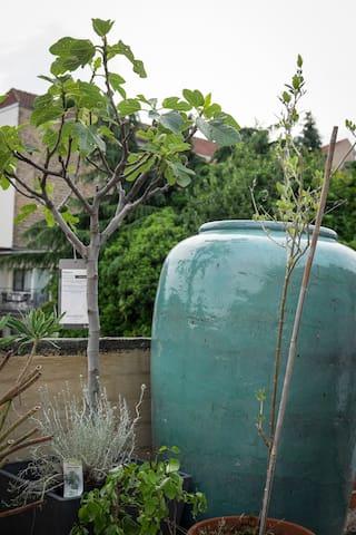 roof terrace/ garden details