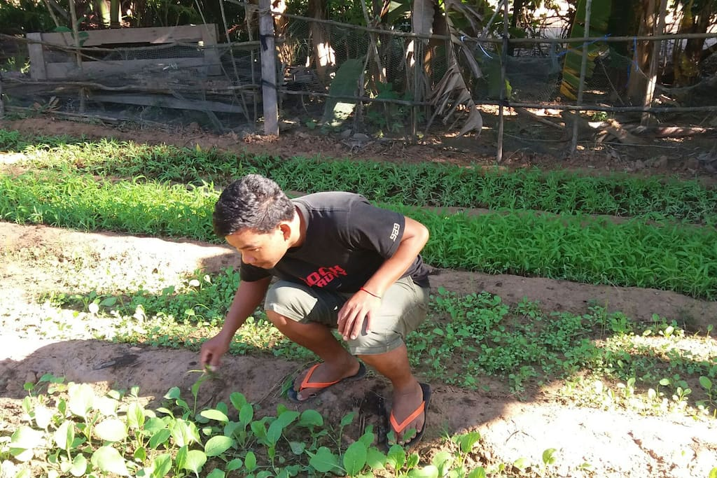 Homestay Vegetable garden; You can task fresh non-chemical vegetables from our garden at each meals.