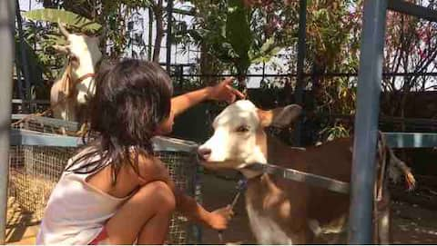 A Sustainable Organic FarmStay - Live & Learn