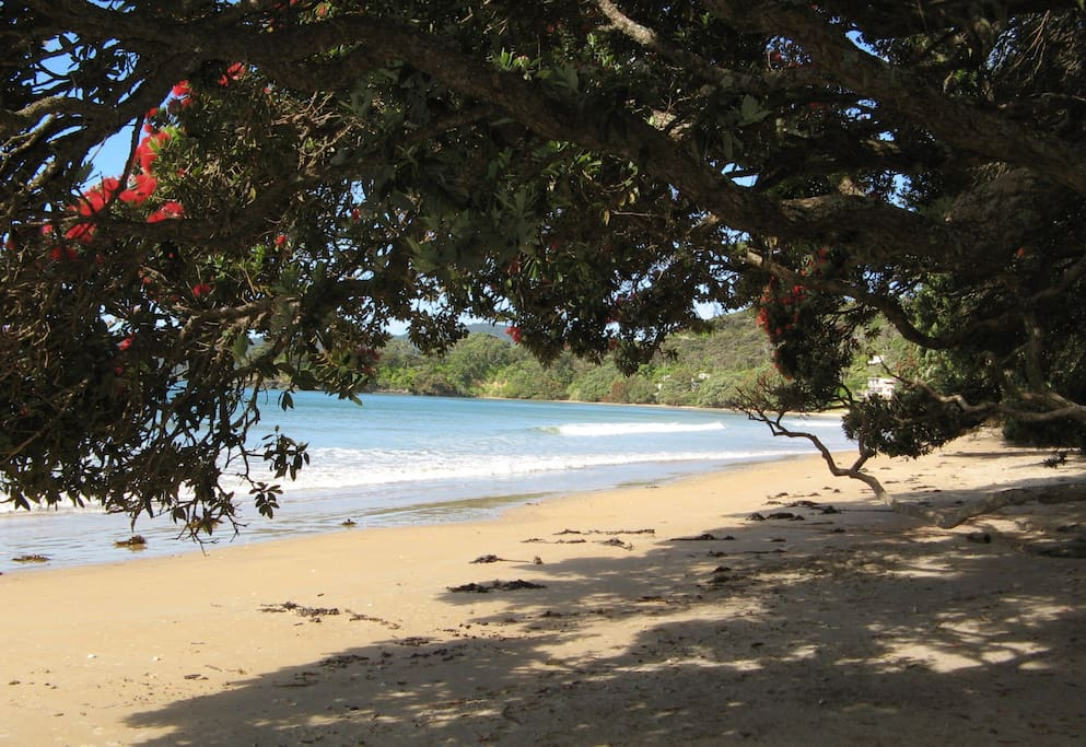 Coopers Beach in Doubtless Bay is a tree lined, safe shaded beach.