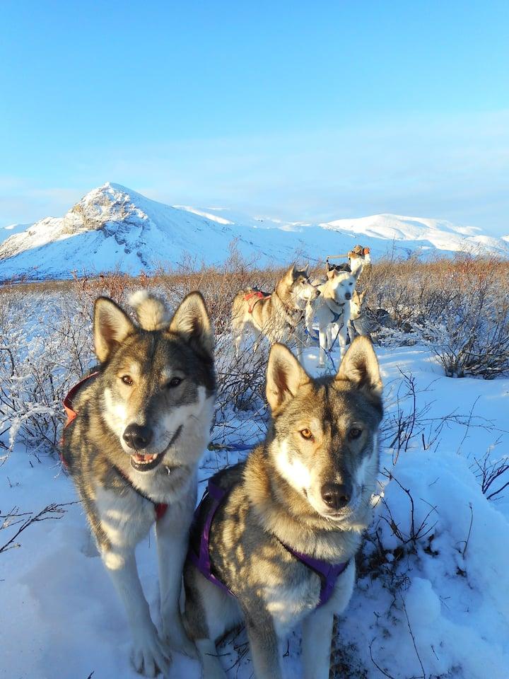 Friendly Alaska huskies are ready to go!