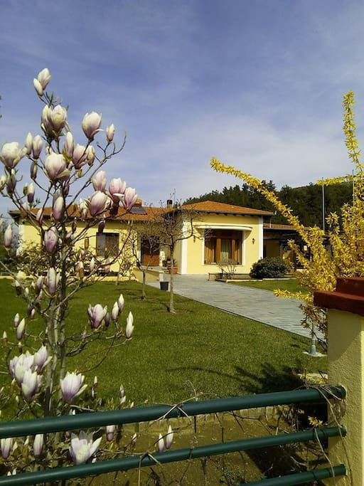 Our house in Spring