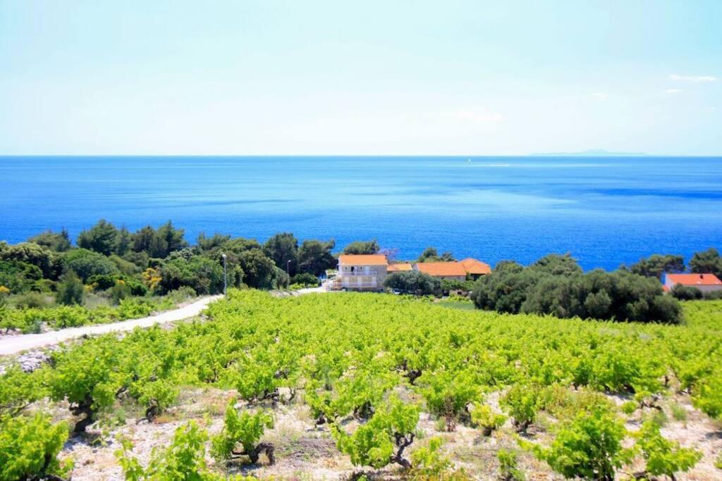 Pohled z vinic nad domem