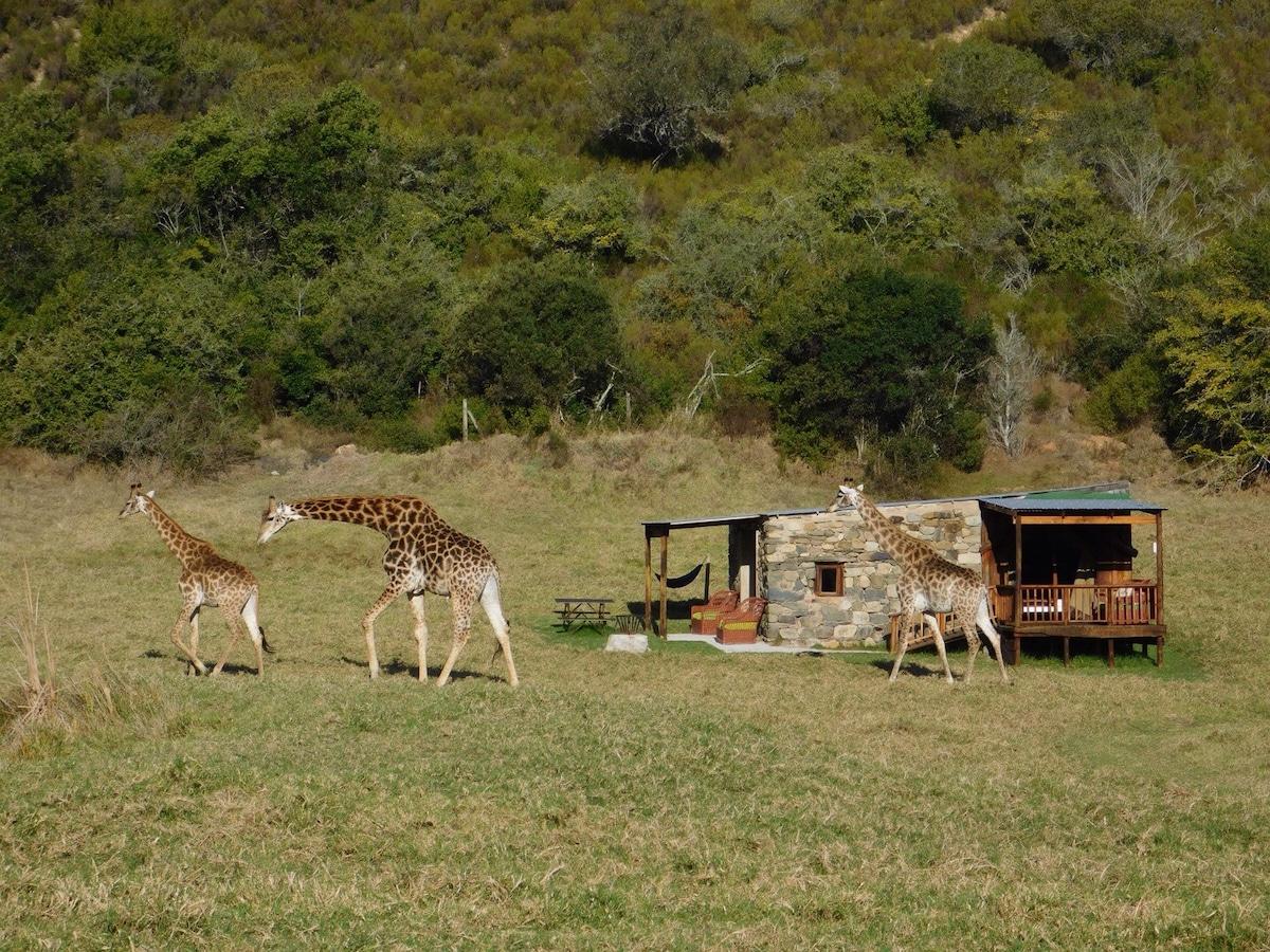 Giraffe View (Zebra Safari Tent) - Tents for Rent in Plettenberg Bay Western Cape South Africa & Giraffe View (Zebra Safari Tent) - Tents for Rent in Plettenberg ...