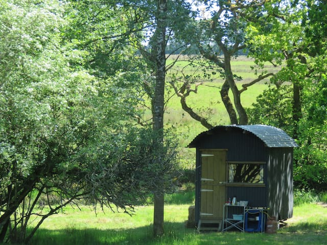 Shepherd's Hut at Moonacre Alpacas, Devon