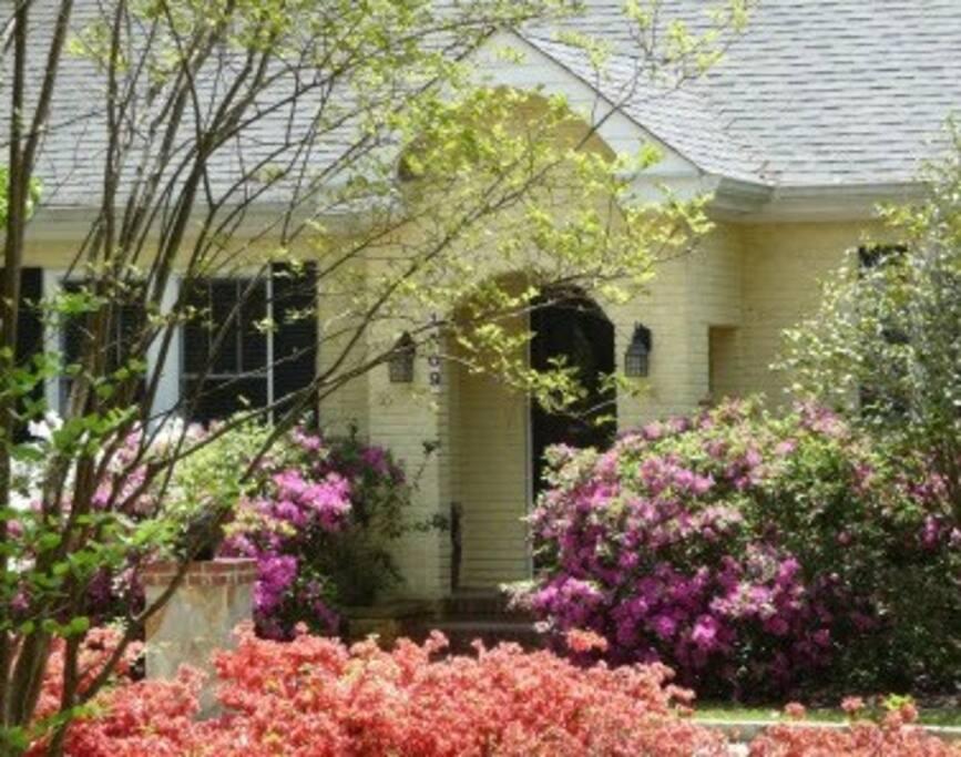Toy Cottage, Azaleas in Bloom