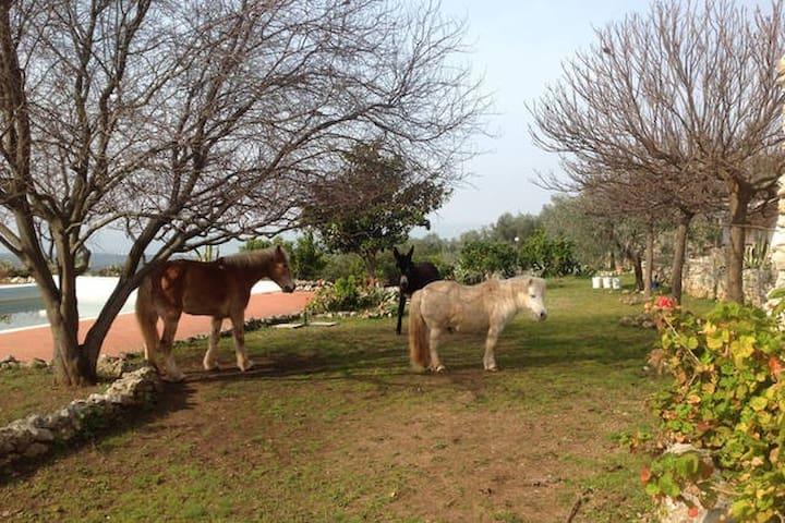 Suite in Agriturismo con giardino - Ischitella - Szoba reggelivel
