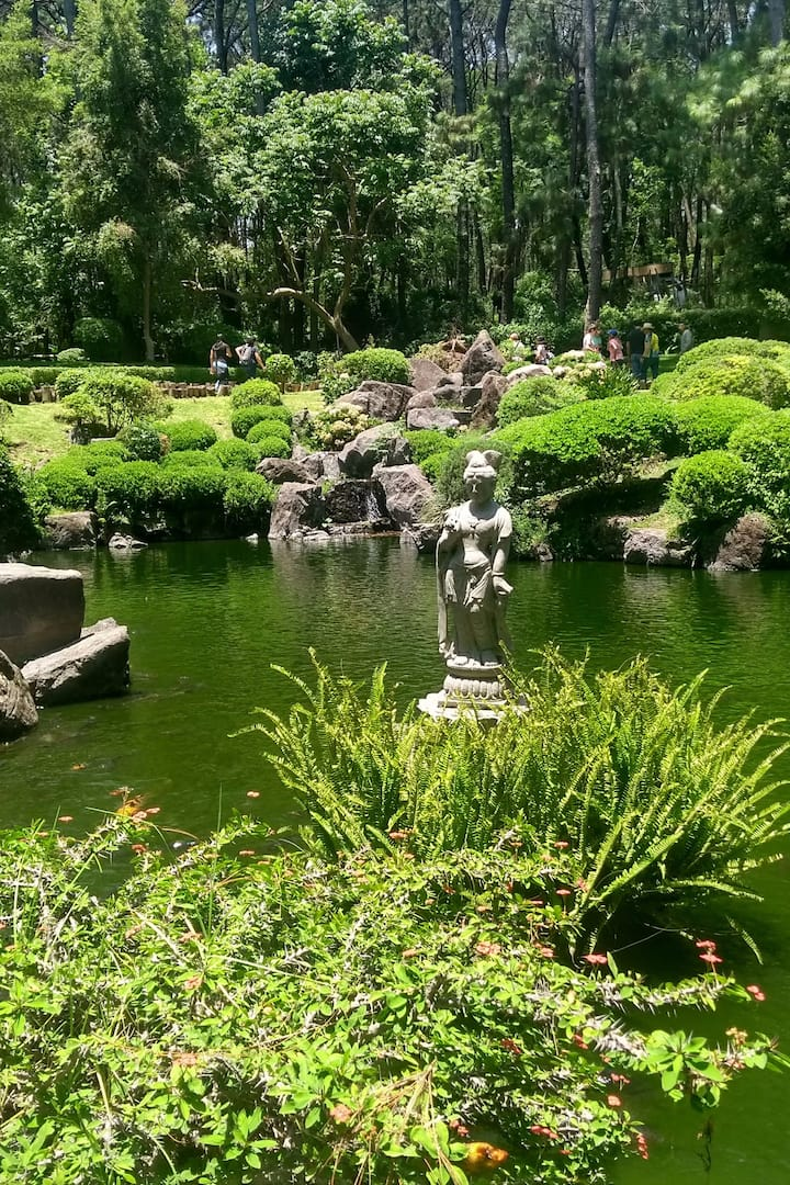 A japonesse garden in Guadalajara