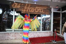 Welcome to Downtown Little Havana where you are going to feel in another country
