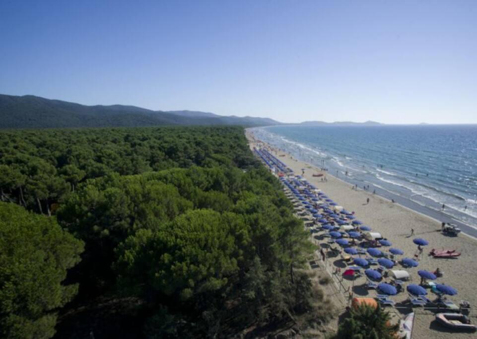 Una delle splendide spiaggie di Punta Ala e pineta mediterranea