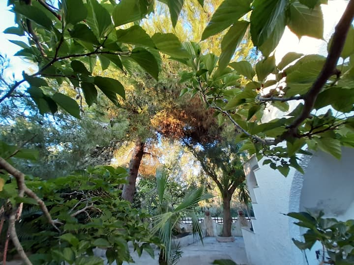 Villa Leda Mancaversa - CIS  LE07508591000011672