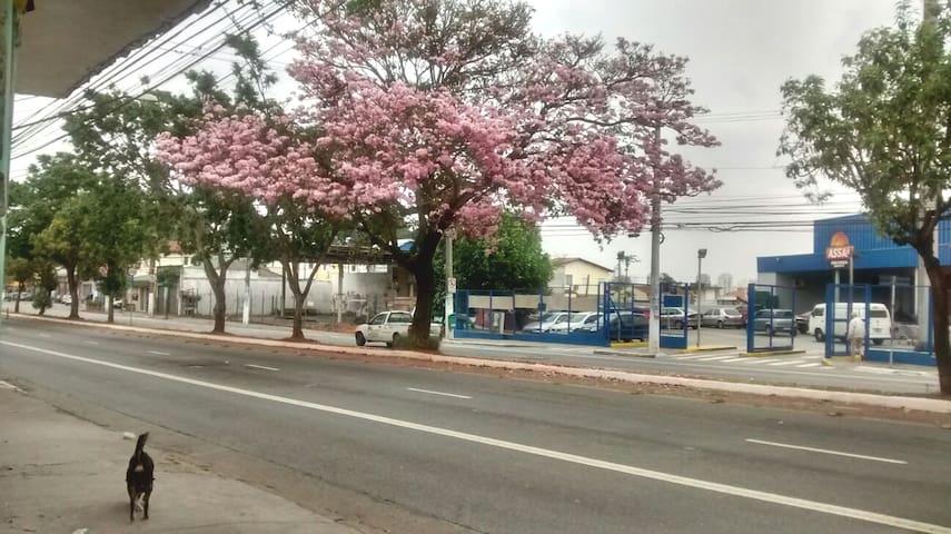 São Paulo expor imigrantes  Entre a casa é sua