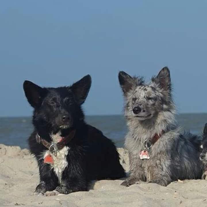 Moi Ferienwohnung Seehund in Nenndorf