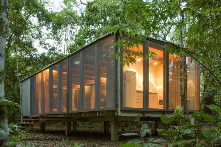 Jungle Design Experience