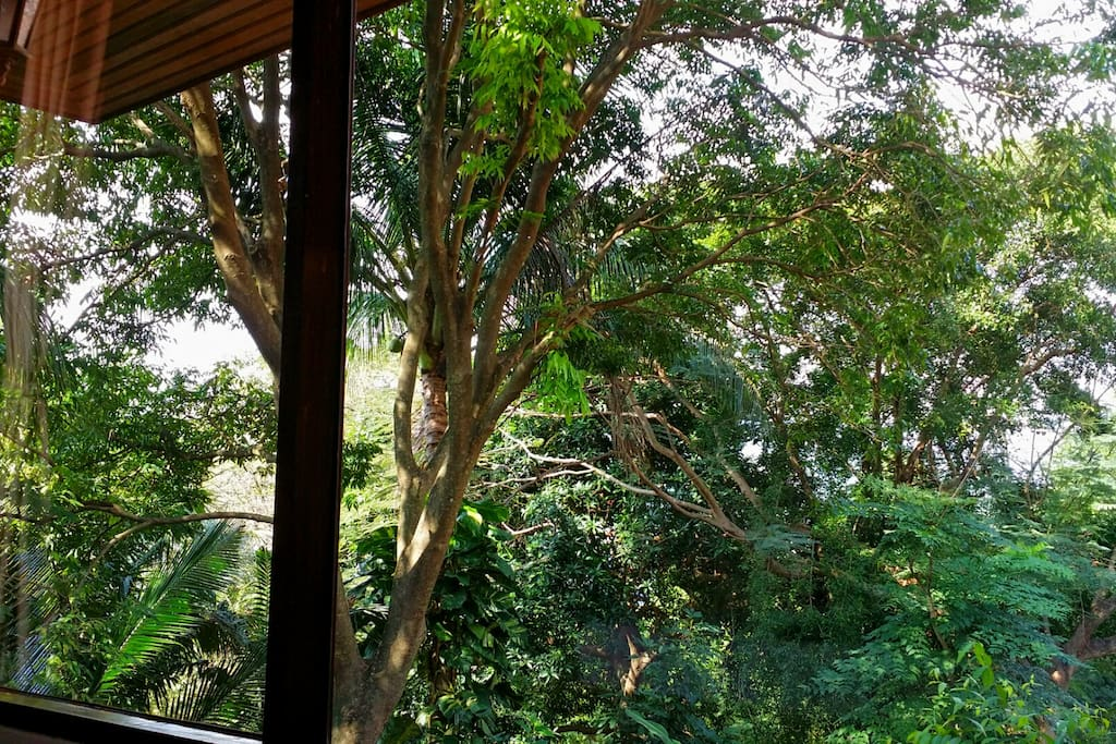 View from King Bedroom